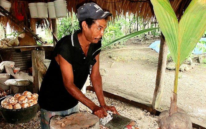 Kokosnussfarm Dominikanische Republik_2