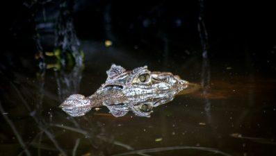 Costa Rica: Pures Leben im Tortuguero Nationalpark