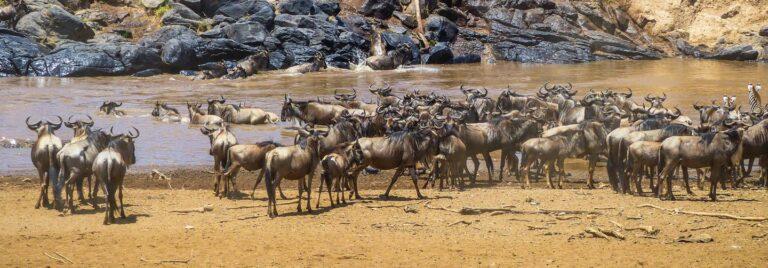 Safari-Abenteuer in der Masai Mara